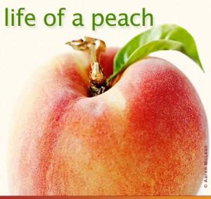 Life of a peach
